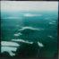 Migration /glacis huile sur toile 80x80cm