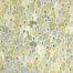 J+de silence & de bruit... /acrylique sur toile 146x114cm