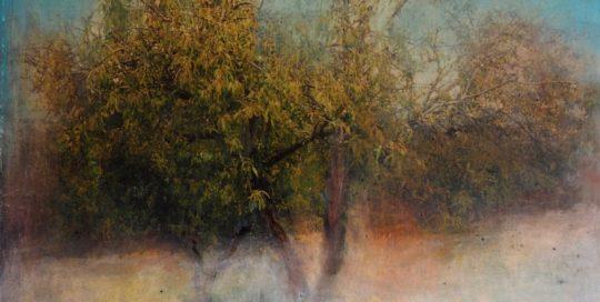 Pommier /photo argentique, encre et pigments 50x50cm